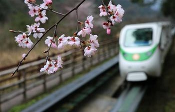 Blossom season witnessed in China