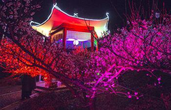 Nanjing: Plum blossoms in full bloom