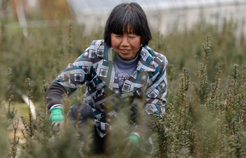 "Farmers busy with farm work on day of ""Jingzhe"""