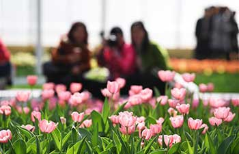 Flowers from Netherlands on show in SW China's Chongqing
