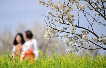 Cherry blossoms attract visitors in China's Shaanxi