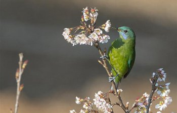 Birds rest on branches of flowers