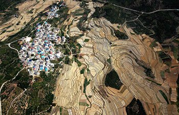 Aerial view of terraced watermelon fields in S China's Guangxi