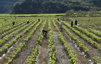 Farmers across China begin farming work