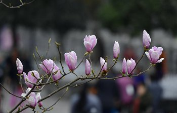 Flowers bloom in central China's Hubei