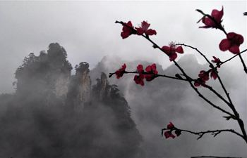 Scenery of Tianzi Mountain in China's Hunan