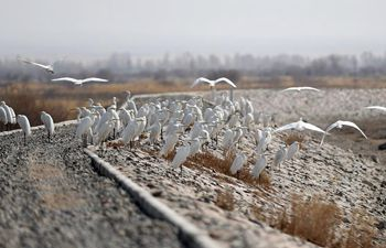 Birds population increases due to wetland protection in NW China's Gansu
