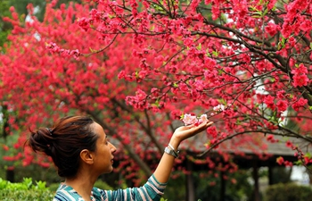People enjoy cherry blossoms in Kathmandu, Nepal