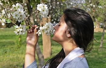 Blooming flowers in Islamabad, Pakistan