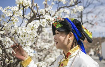 Pear blossoms seen in China's Sichuan