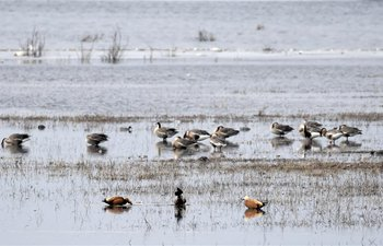 Birds seen at Yeya Lake Wetland Reserve in Beijing