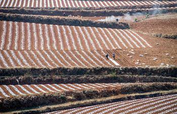 Farmers work in field in Kunming, SW China's Yunnan