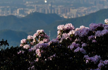 Flowers enter blossom season across China