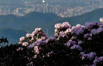 Flowers enter blossom season across China