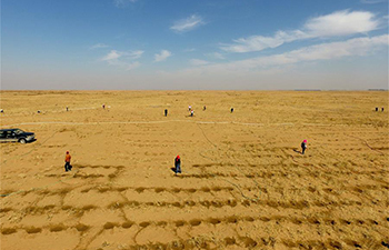 Desert greening work in progress in Bayannur, north China