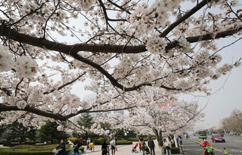 Flowers bloom in spring across China