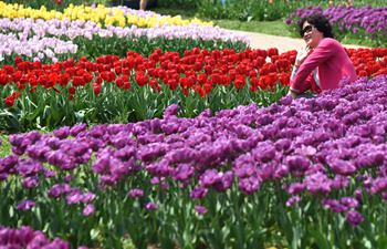 A look at tulip theme park in Wuhan