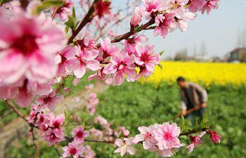 Picturesque rural scenery in Nantong City, east China's Jiangsu