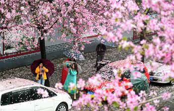 Dance of bauhinia blossoms in south China's Liuzhou