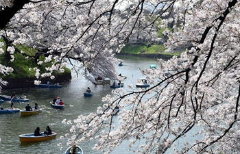 River covered with cherry petals in Tokyo