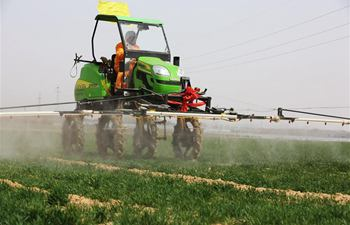 Farmers spray pesticide in field in east China's Shandong