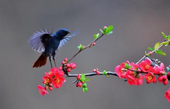 Birds seen at Lushan County, C China's Henan