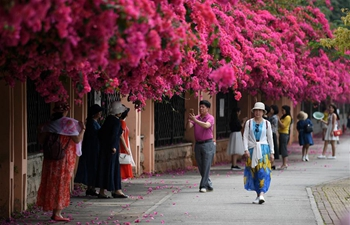 In pics: plum blossoms in Nanning, S China's Guangxi