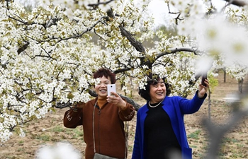 Tourists enjoy pear blossoms in E China's Shandong