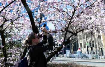 In pics: Flowers blossom in Frankfurt