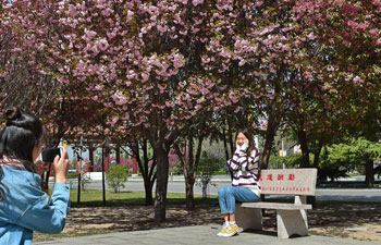 Trees bloom in Shanxi Agricultural University, N China