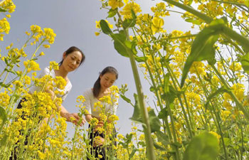 Tourists enjoy themselves amid cole flowers in Shahe, N China