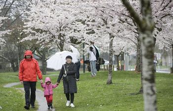 2nd Cherry Blossom Festival attracts visitors in Canada