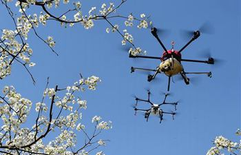Drones used to do pollination in north China