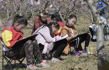 Students do sketches at peach field in N China