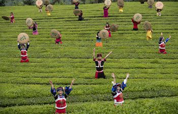 Tea fields in C China's Wufeng enter into spring harvest season