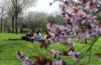 12th Cherry Blossom Festival held in eastern Berlin, Germany