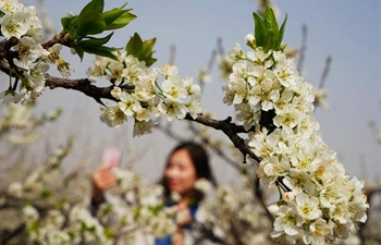 Tourists enjoy plum blossoms in N China's Hebei