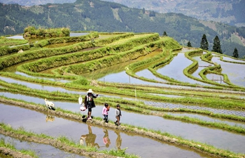 Scenery of terraced fields in SW China's Guizhou