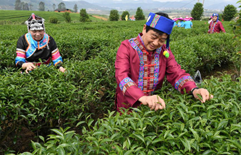 Tourists experience tea-picking in SE China's Fujian