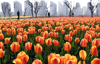 Visitors enjoy tulips in northwest China's Gansu