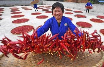 Pic story: rural entrepreneur Zou Daying