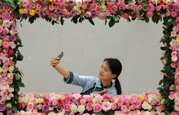 Fair of Chinese rose held in China's Guizhou