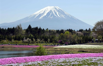 "People enjoy ""Shibazakura"" blossoms at Lake Kawaguchi, Japan"