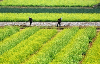 In pics: Farmers work at fields in China