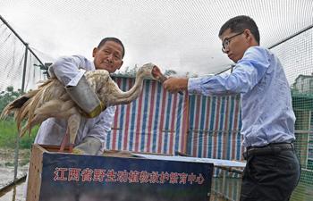 Baby crane rescued near Poyang Lake in E China