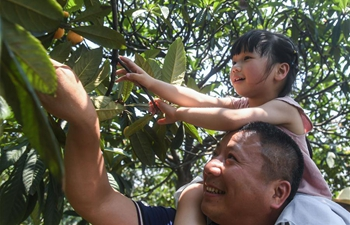 Loquats enter harvest season in E China's Zhejiang