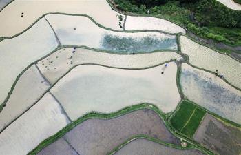 Farmers work in fields in Gaoyao Village, SW China