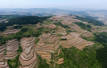 In pics: terrace fields in N China's Shanxi