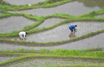 In pics: terraced fields in China's Hunan