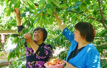 Green industry lifts people's living quality in village of north China